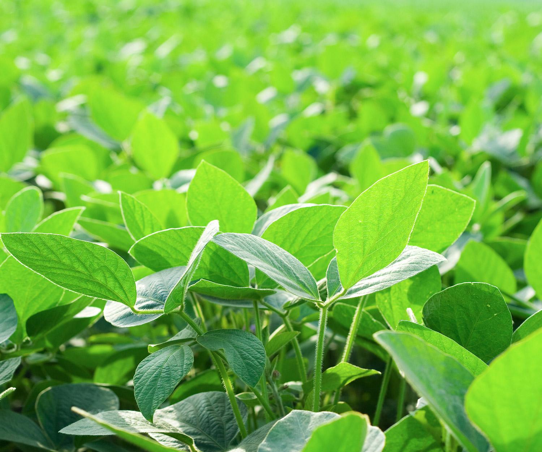 offrir des semences qui répondent aux besoins des producteurs