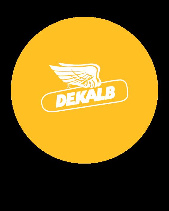 Produits de semences Synagri - Mais et Soya Dekalb