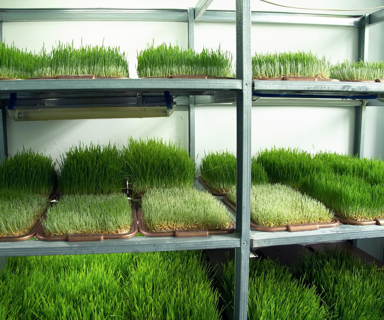 Produits de semences Synagri - Assurance qualité